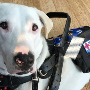 Assistance dog Bailey